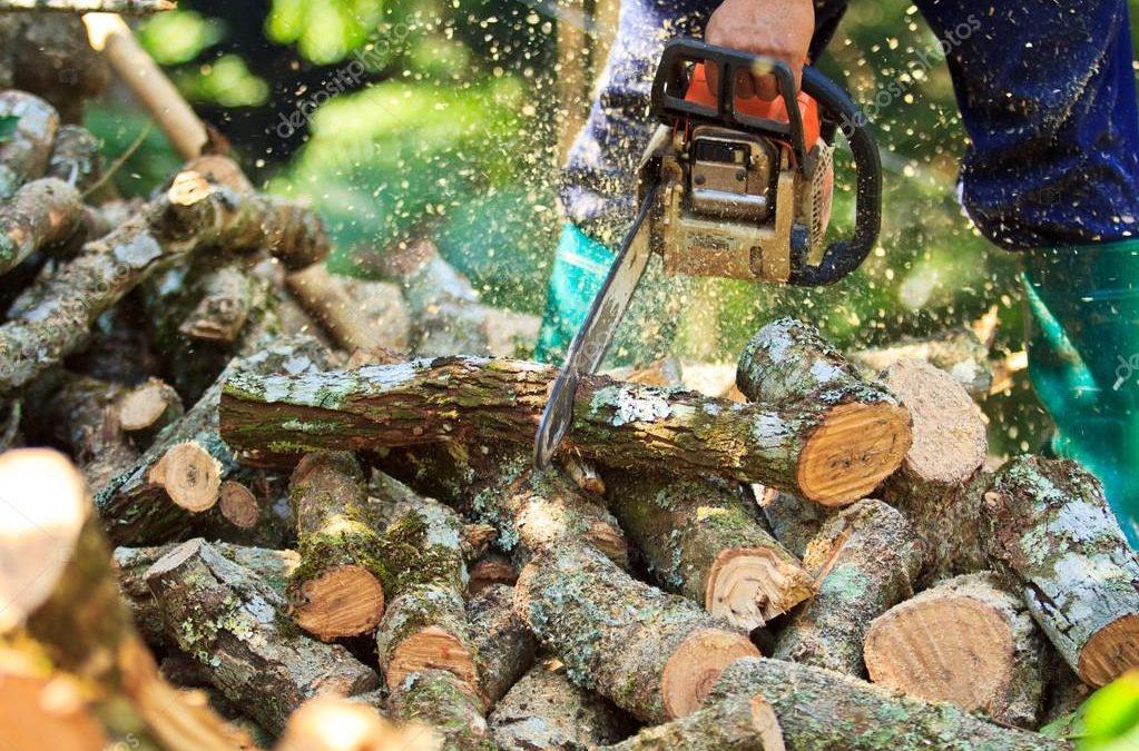 Sorpresi a tagliare legna in un bosco del Vibonese  Due fratelli arrestati per furto dai carabinieri
