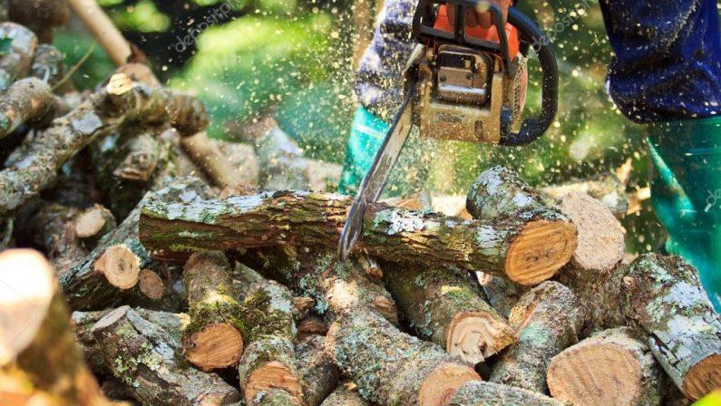 Sorpresi a tagliare legna in un bosco del ViboneseDue fratelli arrestati per furto dai carabinieri