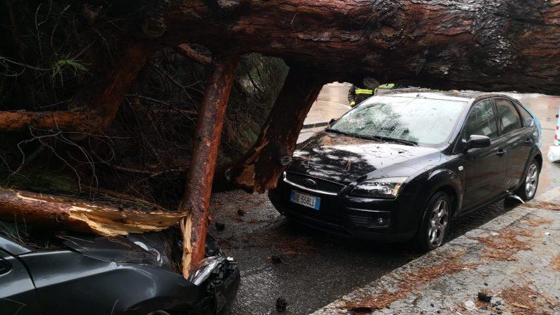 Maltempo a Reggio Calabria, crollano gli alberi al GebbioneDanneggiate le auto poste nelle immediate vicinanze
