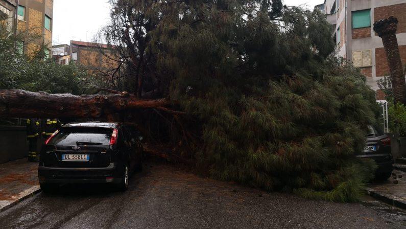 FOTO - Maltempo a Reggio Calabria, crollano gli alberi al quartiere Gebbione