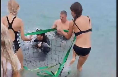 Delfino a riva a Capo Vaticano salvato dai volontariAffidato ad un centro di Montepaone - VIDEO