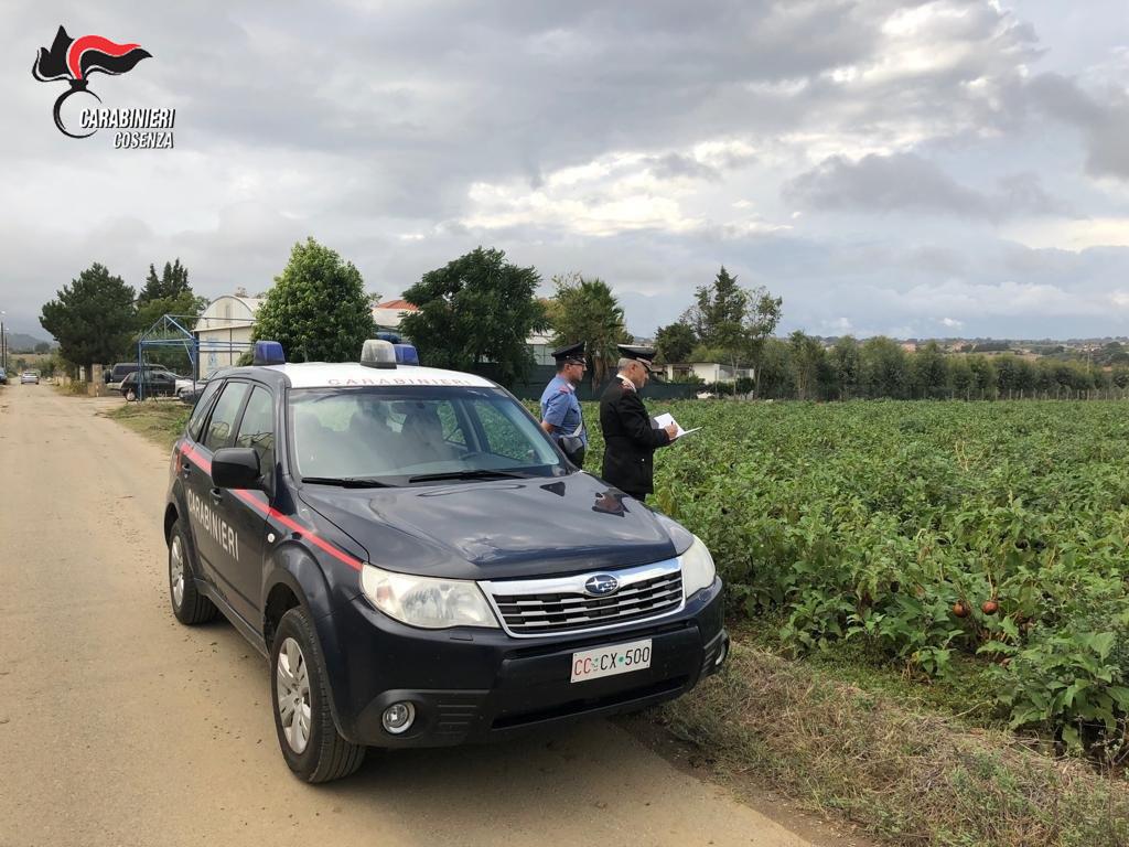 """Arrestato """"caporale"""" che sfruttava immigrati nel Cosentino  Nessun diritto, 9 ore di lavoro e solo 20 euro al giorno"""
