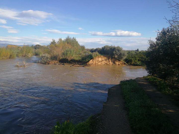 Esondazione del Crati nel Cosentino, strage di pecorePer la Coldiretti ne sono annegate oltre 1.000