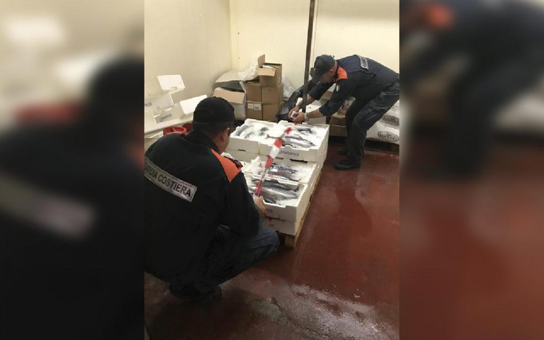 Tonno rosso fuori misura, maxi multa nel Vibonese  I pesci troppo piccoli per la vendita, donati ad un ente benefico