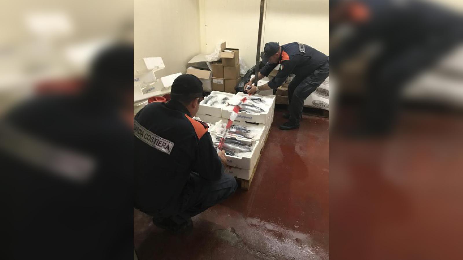 Tonno rosso fuori misura, maxi multa nel ViboneseI pesci troppo piccoli per la vendita, donati ad un ente benefico