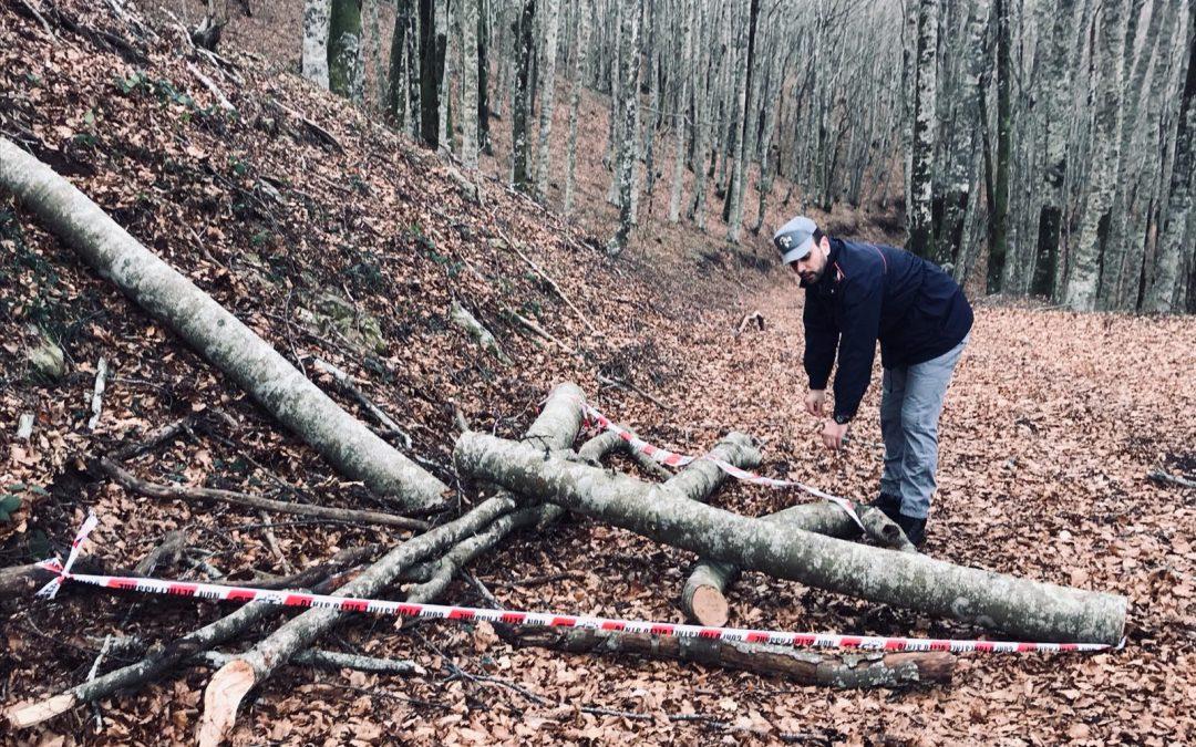Sorprese a rubare legna da un terreno comunale  Arrestate tre persone in provincia di Cosenza