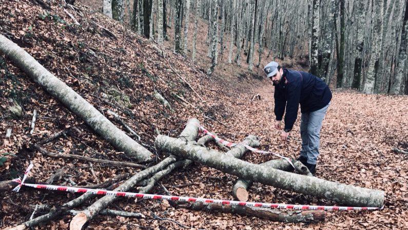 Sorprese a rubare legna da un terreno comunaleArrestate tre persone in provincia di Cosenza