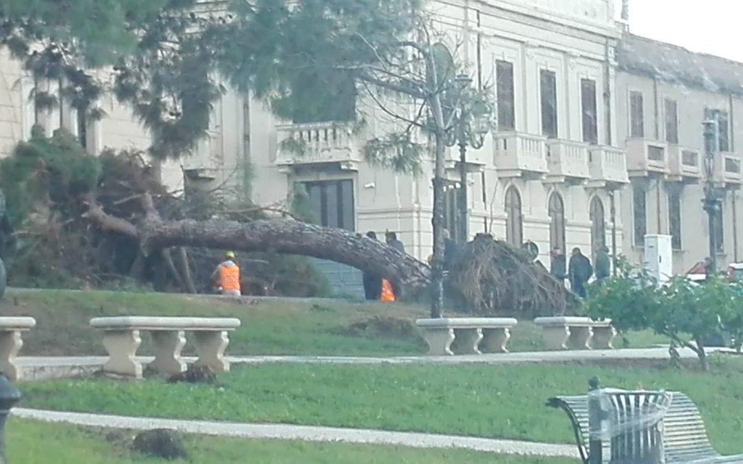 L'albero crollato sul lungomare di Reggio Calabria