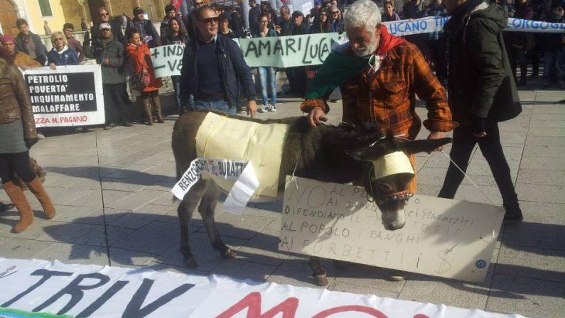 Rubato l'asino simbolo della lotta per l'ambienteNicoletta scomparsa dall'azienda del Materano