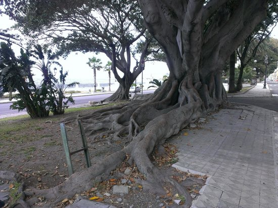 Aumenta il verde in Italia, Calabria è al secondo postoTra le città spicca il dato di Reggio: prima per alberi