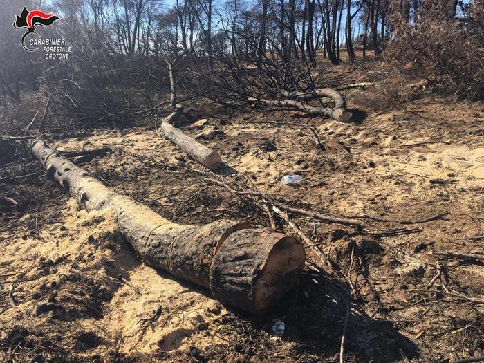 Sorpresi a rubare legna nella pineta di SoveretoArrestati due operai di Isola Capo Rizzuto