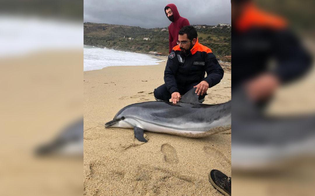 Il delfino morto sulla spiaggia a Nicotera