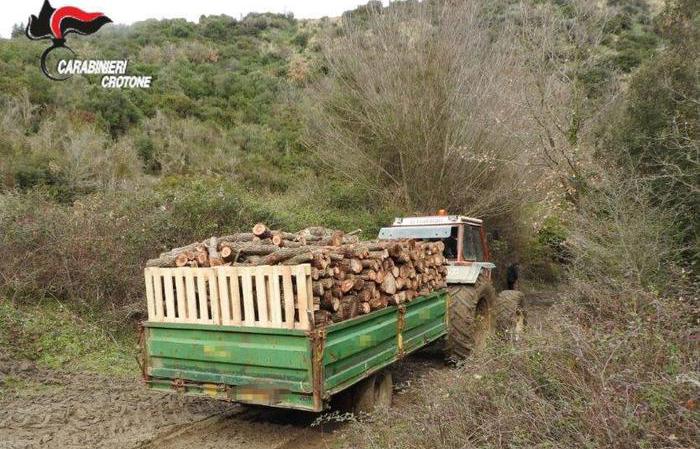 Furto di legna nel crotonese, tre persone arrestateSorprese dai Carabinieri a tagliare alberi in un terreno privato