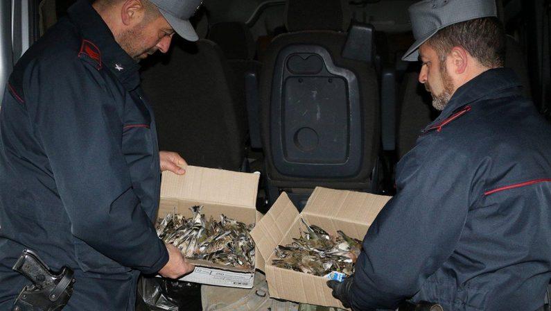 Cacciavano specie protette, 15 cacciatori denunciatiSorpresi dai carabinieri nell'area della Sibaritide