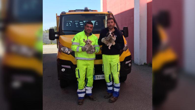 Gioiosa Jonica, gli operai Anas salvano due cuccioliErano stati abbandonati sul ciglio della strada