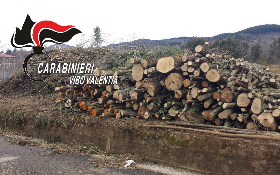 Sorpresi a tagliare alberi parzialmente senza autorizzazione  Migliaia di euro di multa e denuncia penale per tre persone