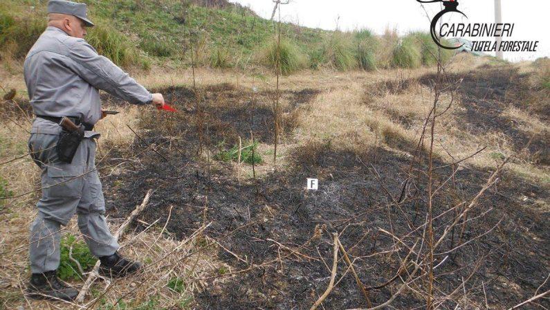 Brucia erbacce e provoca incendio in un boscoIndagini portano ad una denuncia nel Cosentino