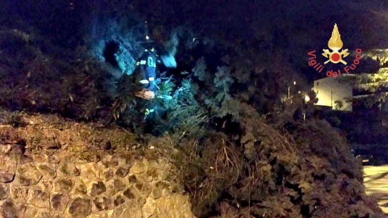 Maltempo in Calabria, danni ingenti per l'agricolturaLa denuncia di Confagricoltura dopo il forte vento