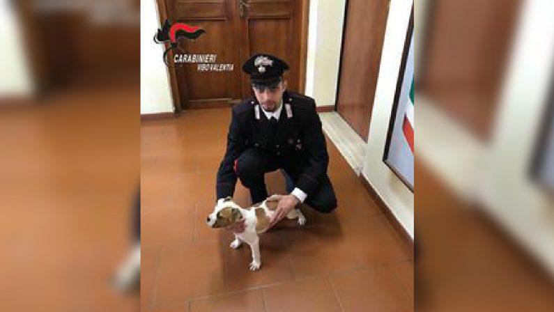 """Vibo Valentia, la storia a lieto fine del piccolo """"Birillo""""  Rubano un cucciolo ma i carabinieri li scoprono e denunciano"""