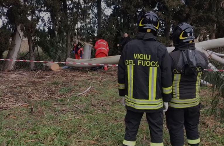 Incidente sul lavoro a Policoro, muore un operaio: travolto da un albero di eucalipto che stava abbattendo