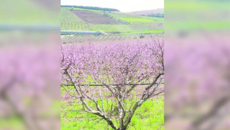 Climate change, effetti del cambio clima già presenti in CalabriaGli agronomi lanciano l'allarme «Necessario adattarsi»
