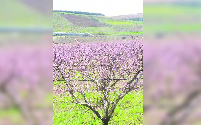 Climate change, effetti del cambio clima già presenti in Calabria  Gli agronomi lanciano l'allarme «Necessario adattarsi»