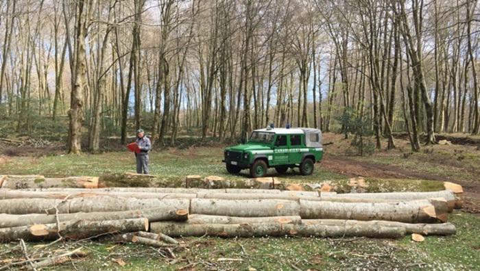 Taglia abusivamente quasi 200 alberi di leccio  Arrestato un uomo a Oppido Mamertina