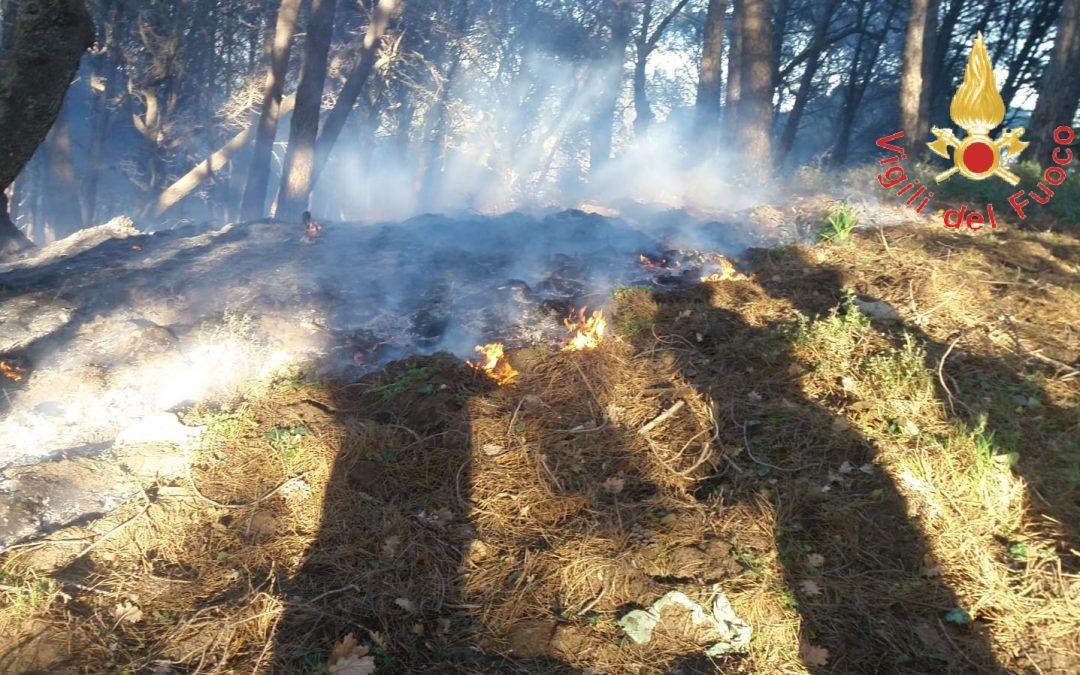 """Incendio lambisce coop """"Nido di Seta"""", distrutto bosco Indagini nel Catanzarese: possibile matrice dolosa"""