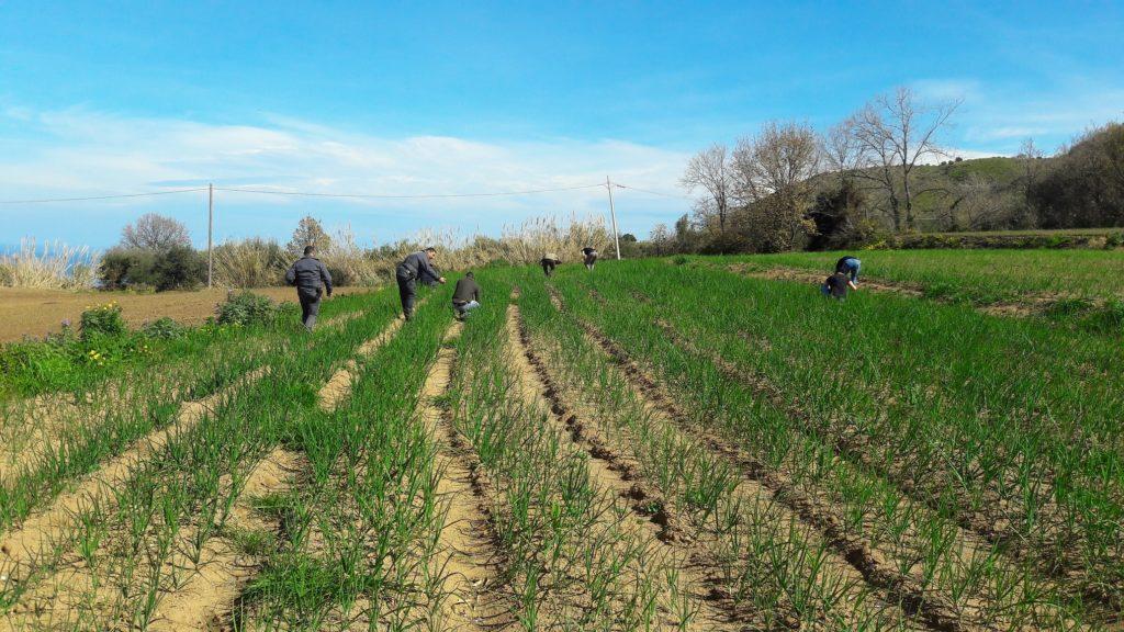Agricoltura, dalla Regione Calabria in arrivo 3 milioni di euro per cooperazione e ricerca