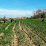 lavoro nero agricoltura gdf.jpg