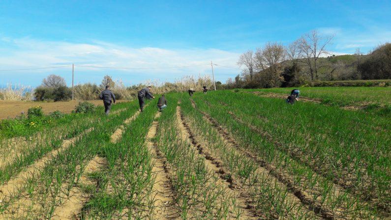 Coldiretti, in trent'anni in Calabria è sparito un quarto delle terre coltivate