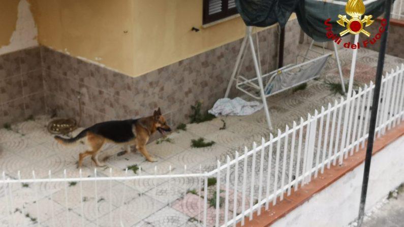 VIDEO - Incendio in un appartamento del Cosentino, i soccorsi e il salvataggio del cane