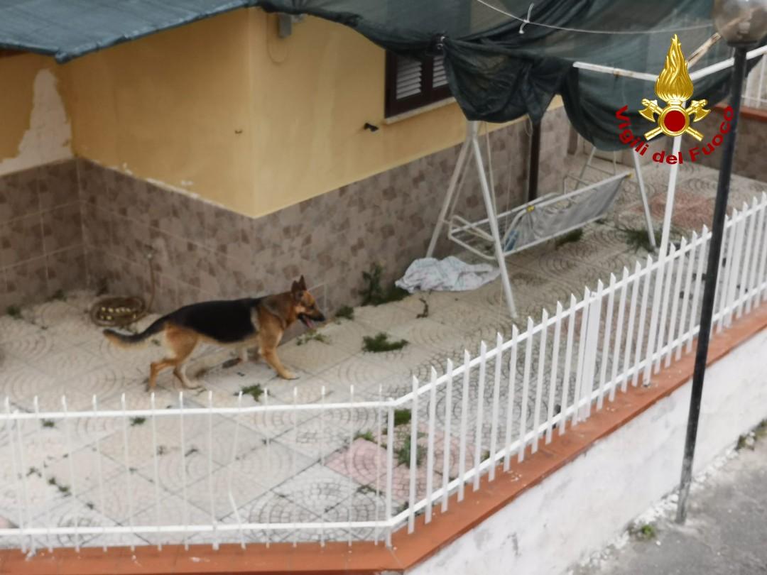 cane salvato scalea