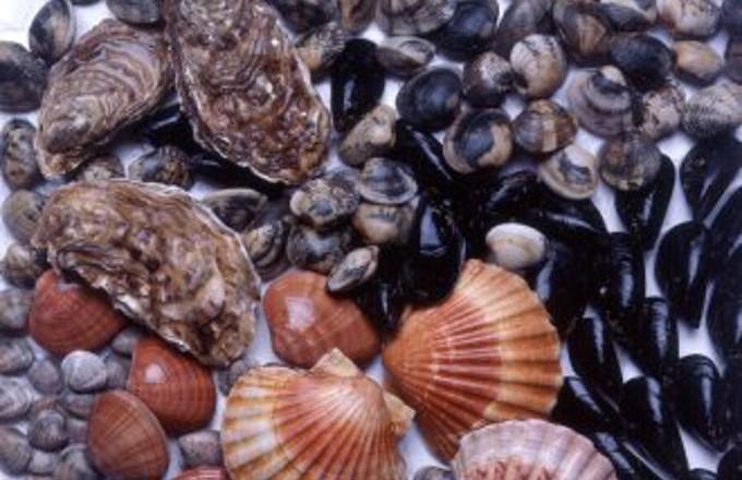 Oltre una tonnellata di molluschi sequestrati nel CatanzareseErano provenienti da Taranto ma senza refrigerazione