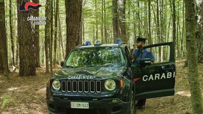 Non riescono a disfarsi della droga prima dell'irruzione dei carabinieri, arrestata una coppia nel Cosentino