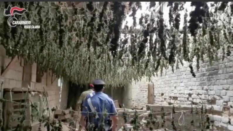 Taurianova, scoperto un essiccatoio per la marijuana: 7 mila piante per un valore di 3 milioni di euro