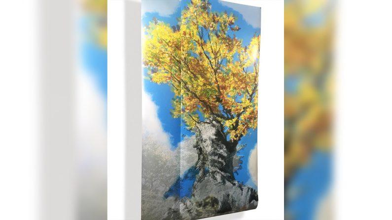 """Demetra"", la quercia millenaria del Parco dell'Aspromonte diventa un'opera d'arte"