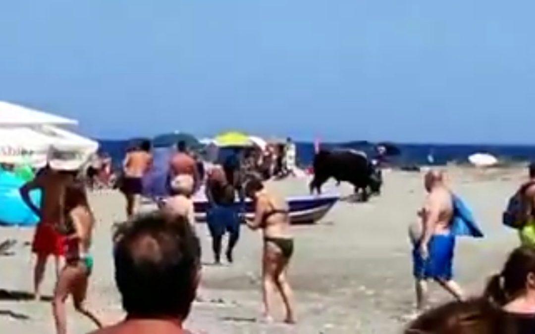 Il toro tra i bagnanti