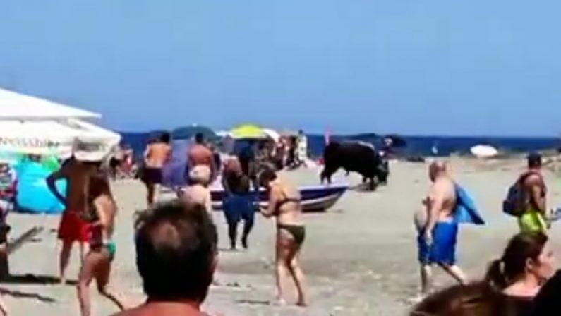 Un toro semina il panico sulla spiaggia di Corigliano Rossano - VIDEO
