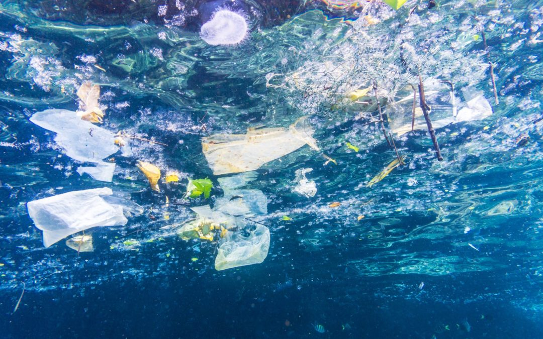Anche i mari della Calabria soffocati da plastica e rifiuti  Dal 2015 al 2018 in aumento soprattutto sul Tirreno