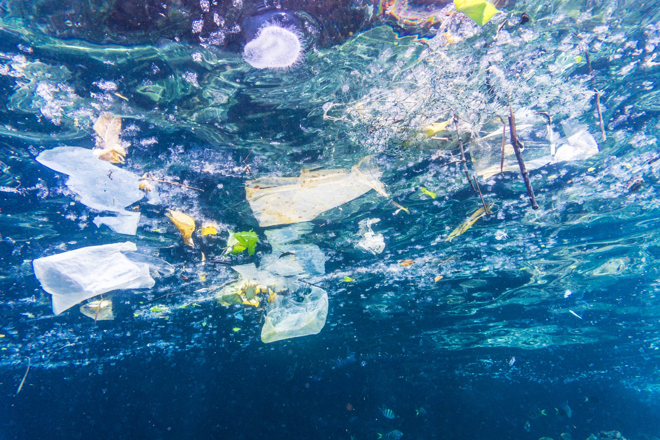 Anche i mari della Calabria soffocati da plastica e rifiutiDal 2015 al 2018 in aumento soprattutto sul Tirreno