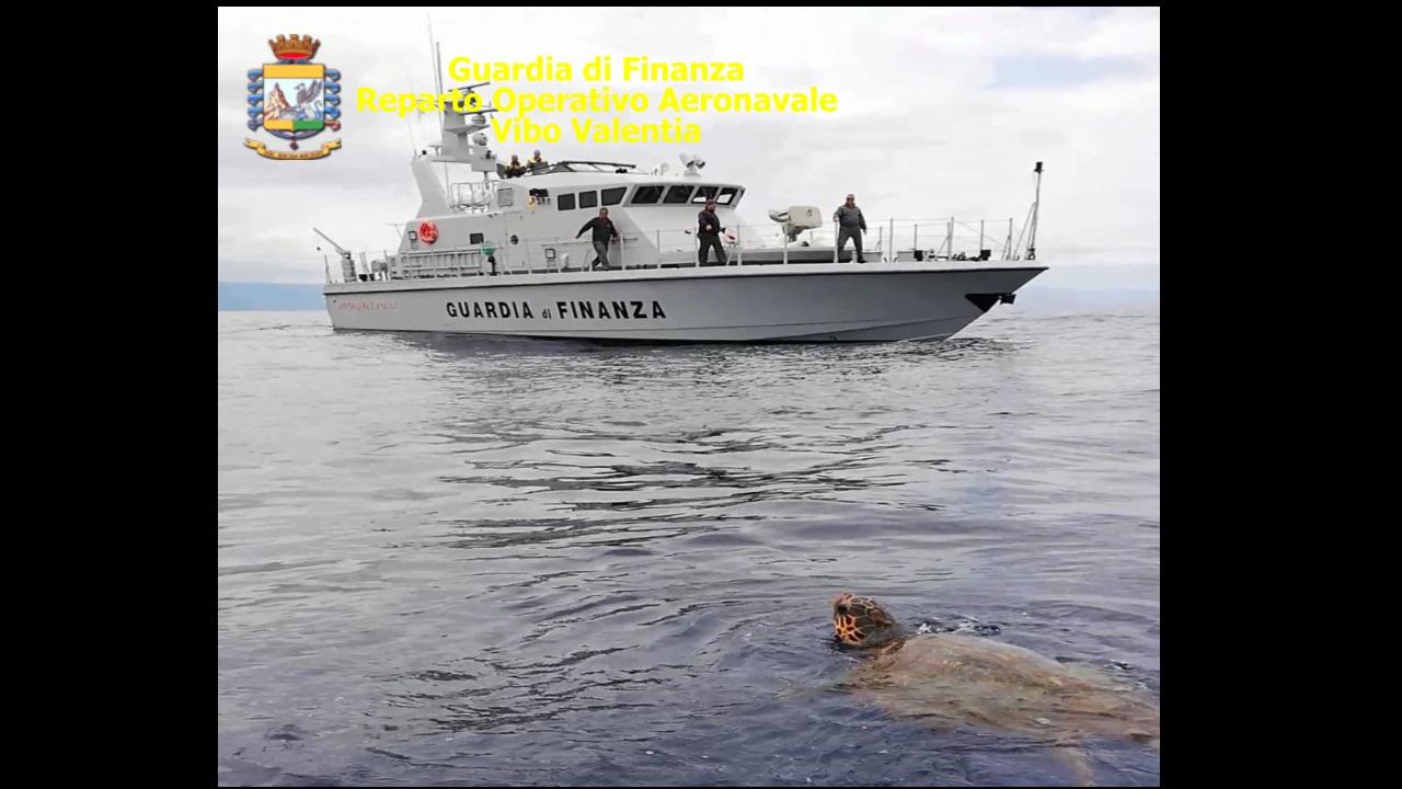 Tartaruga caretta-caretta salvata in mareIntervento di una motovedetta nel Reggino