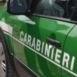 Forestali carabinieri.jpg