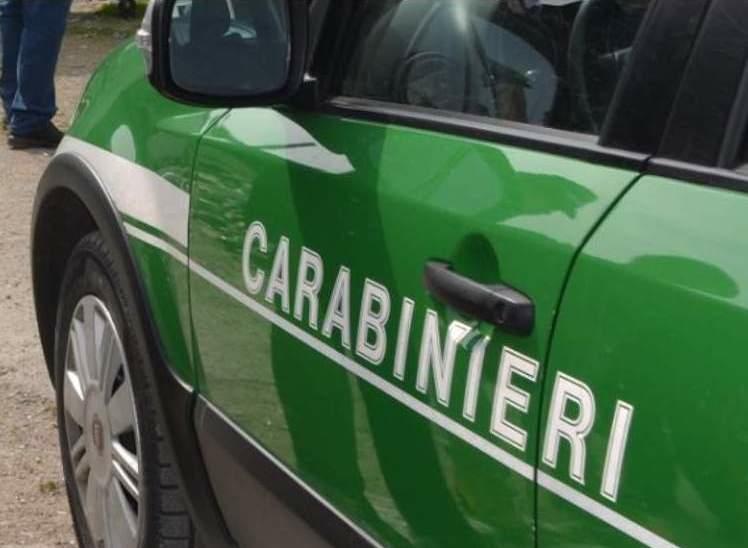 Truffa, peculato e omessa denuncia: ai domiciliari il comandante del Nucleo carabinieri biodiversità e un carabiniere scelto