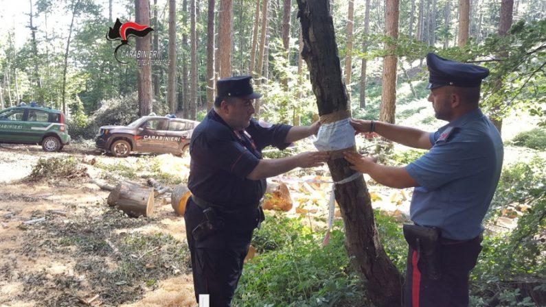 Tagliati senza autorizzazione quasi 3 ettari di boscoDenunciato il proprietario dell'area a Lamezia Terme