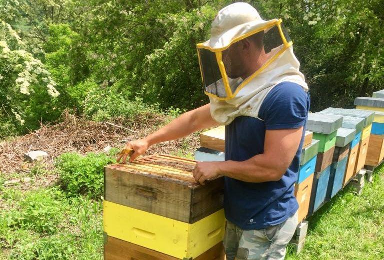 Stato di emergenza per l'apicoltura, scarsa la produzione di miele anche in Irpinia