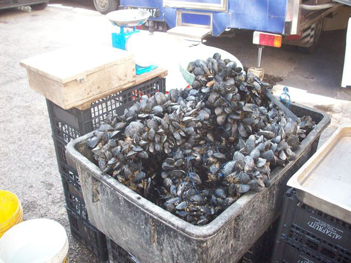Pesca: Gdf Napoli sequestra oltre 200 tonnellate di mitili