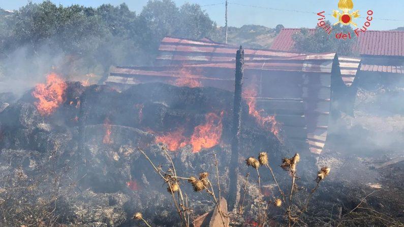 Incendio distrugge una stalla nel CatanzareseVigili salvano animali e abitazioni vicine al rogo