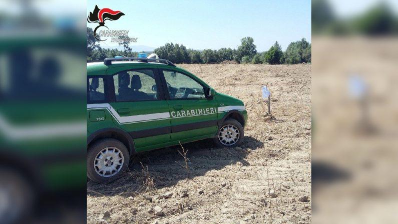 Estirpano un intero agrumeto a Corigliano RossanoDenunciate due persone e sequestrati 2 ettari di terreno