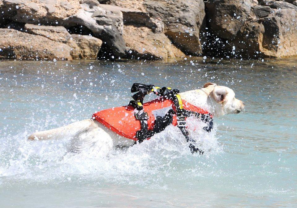 Bimba si smarrisce in spiaggia nel Catanzarese  Rintracciata tra migliaia di persone dai cani bagnino
